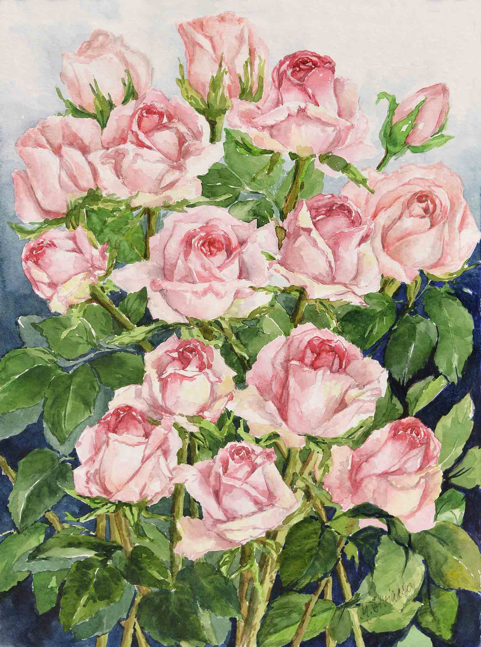 Rose rosa - acquerello cm 48x36